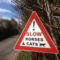 Slow Horses & Cats!!