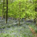 IronMate Photo - Blue Bell Wood Buckinghamshire (Secret Location)