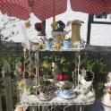 IronMate Photo - Plants In Teapots And Cups For Sale Greatt Bedwyn